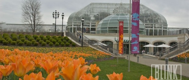 Find Blink Ink Pittsburgh Postcards at Phipps Conservatory!
